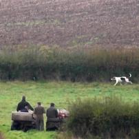 IFAW-terriermen