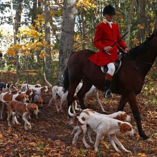 ROWLEY, MA - OCTOBER 25: Huntsman Phillip Headdon and his horse George lead a fox hunt at Kitty Crossing Farm on October 25, 2015 in Rowley, Massachusetts. (Photo by Maddie Meyer/Getty Images)