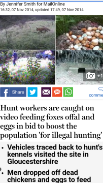 hunts-feeding-foxes-228812