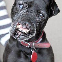 terrier-dog-deformed-2276354