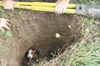 Terrier-down-hole-88245