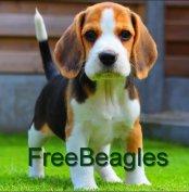 freebeagles-logo