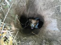 terrier-in-hole-22239