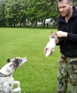 3dog-attacking-rabbit