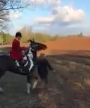 assault-horse-ramming-778234
