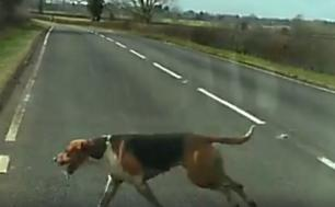 atherstone-hounds-on-road