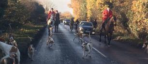 Badsworth-hounds-on-road
