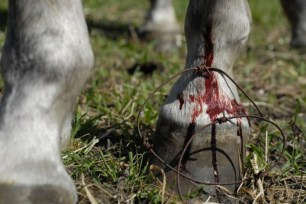 barbed-wire-focus-injury-cut