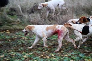 blood-on-hound-994567