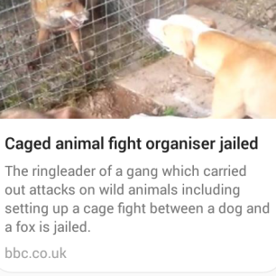 cage-fight-between-dog-and-fox