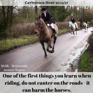 cantering-on-road