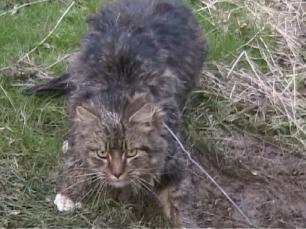 cat-in-snare-77293
