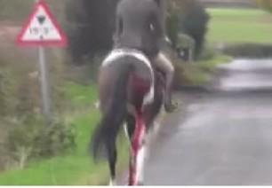 coloured-horse-gash-rear