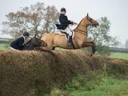 crashing-through-hedge