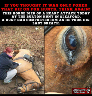 cruelty-horse-dead-11998