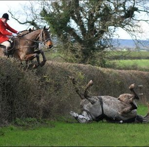 cruelty-horse-fall-at-hedge-33310