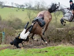 cruelty-horse-fall-at-hedge-33311