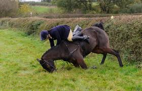cruelty-horse-fall-at-hedge-33312