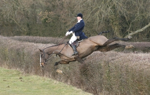 cruelty-horse-fall-at-hedge-33313