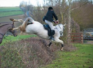 cruelty-horse-fall-at-hedge-33314