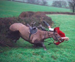 cruelty-horse-fall-at-hedge-33377