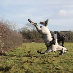 cruelty-horse-fall-at-hedge-33379