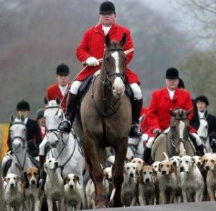 cruelty-horse-fat-hunter-8824