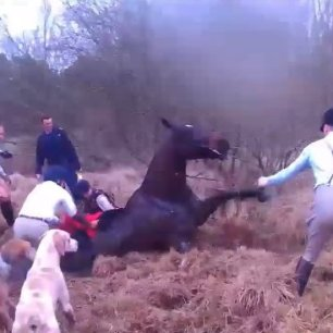 cruelty-horse-in-bog-1123
