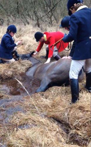 cruelty-horse-in-bog-1124