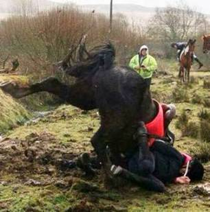 cruelty-horse-jumping-ditch-22877