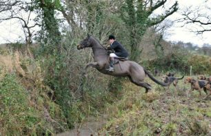 cruelty-horse-jumping-ditch-991176