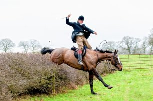 cruelty-horse-jumping-hedge-88223