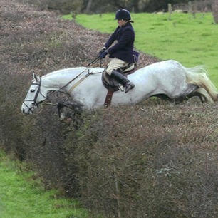 cruelty-horse-jumping-hedge-888822