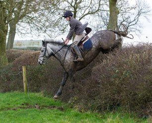 cruelty-horse-jumping-hedge-and-wire