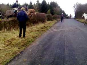 cruelty-horse-jumping-onto-road-88255