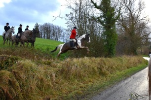 cruelty-horse-jumping-onto-road-88256