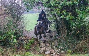 cruelty-horse-jumping-stone-wall-222999