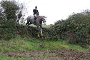 cruelty-horse-jumping-stone-wall-88866