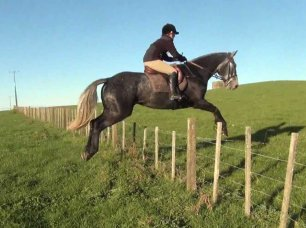 cruelty-horse-jumping-wire-111878