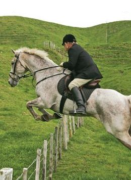 cruelty-horse-jumping-wire-88273