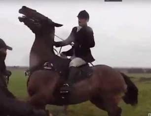 cruelty-horse-pulling-mouth-88234