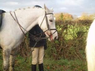 cruelty-to-hunt-horses-99234