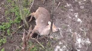 dead-deer-88886