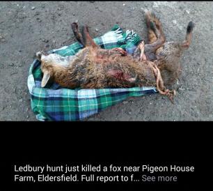 dead-fox-22987