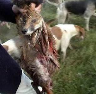 dead-fox-3337