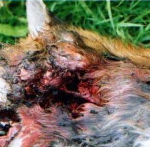 dead-fox-33812