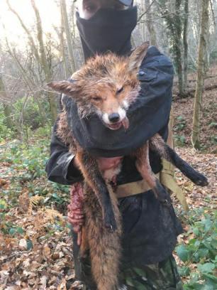 dead-fox-44488