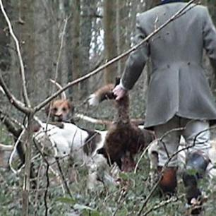 dead-fox-77234