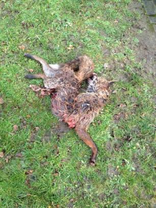 dead-fox-77564