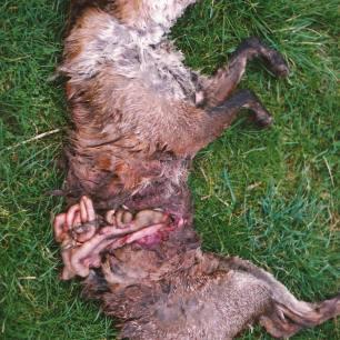 dead-fox-77822